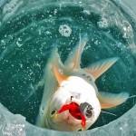 Подледная рыбалка